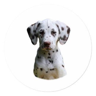 Dalmatian puppy dog photo 5.25x5.25 square paper invitation card