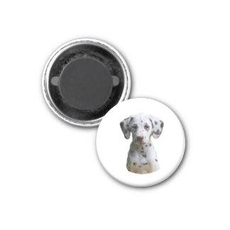 Dalmatian puppy dog photo fridge magnets