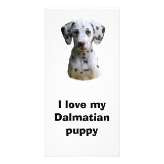 Dalmatian puppy dog photo photo card