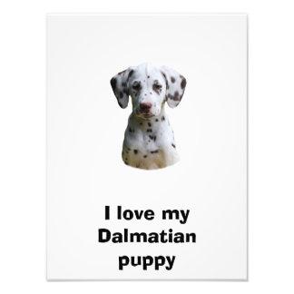 Dalmatian puppy dog photo