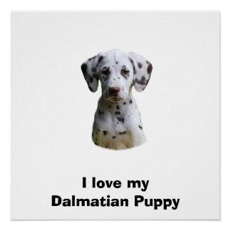 Dalmatian puppy dog photo poster