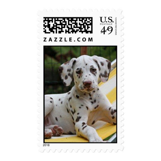 Dalmatian puppy dog postage stamp