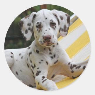 Dalmatian puppy dog stickers gift idea