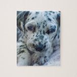 "Dalmatian puppy jigsaw puzzle<br><div class=""desc"">Dalmatian puppies,  black and white,  starting to walk</div>"
