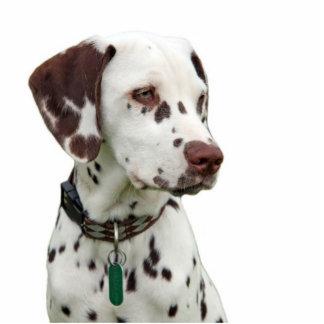 Dalmatian puppy photo sculpture, gift idea