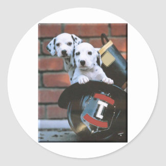 Dalmatian Puppy's Classic Round Sticker