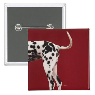 Dalmatian Rear 2 Inch Square Button