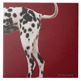 Dalmatian Rear Tile