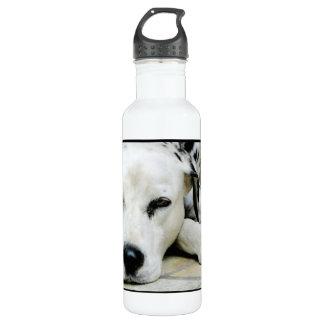 Dalmatian Resting 24oz Water Bottle