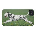 Dalmatian Running iPhone 4 Case-Mate Cases