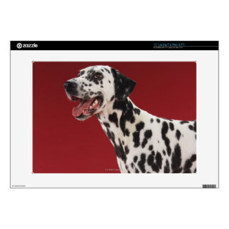 "Dalmatian Skin For 15"" Laptop"