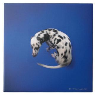 Dalmatian spinning tiles