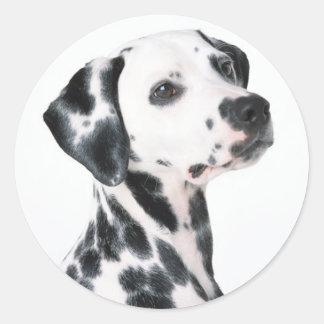 Dalmatian Round Stickers