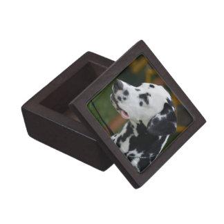 Dalmatian with Spots Keepsake Box