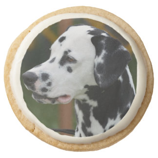 Dalmatian with Spots Round Shortbread Cookie