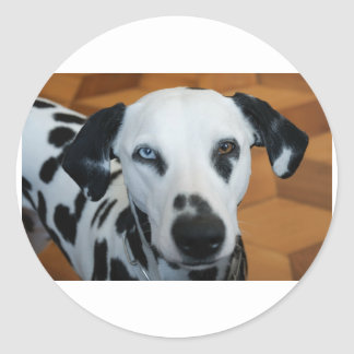 dalmation 2 color eyes.png classic round sticker
