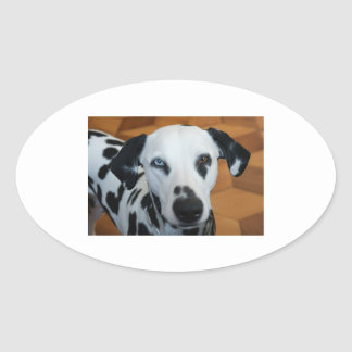 dalmation 2 color eyes.png oval sticker