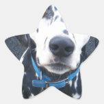 Dalmation Dog Dexter Star Sticker