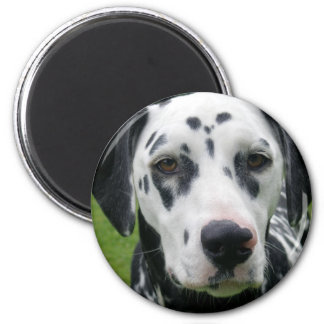 Dalmation Dog Dollys Face 2 Inch Round Magnet