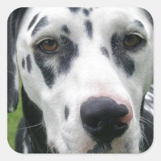 Dalmation Dog Dollys Face Sticker
