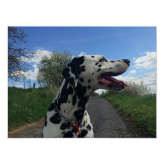 Dalmation Dog on Walking Path, Sunny Day Poster