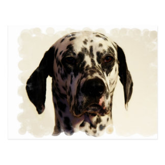 Dalmation Dog Postcard
