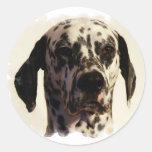 Dalmation Dog Sticker