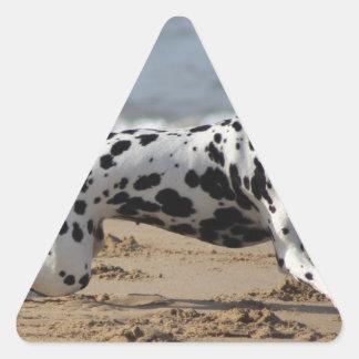 Dalmation Pegatina Triangular