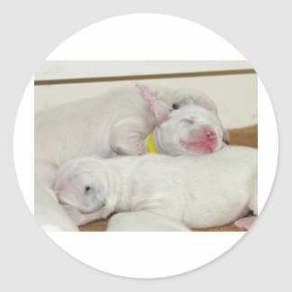 dalmation puppies.png classic round sticker