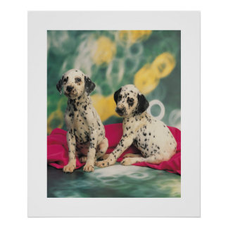 Dalmation Puppies Poster