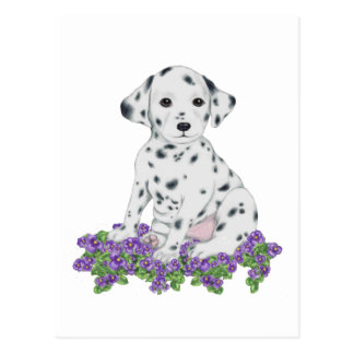 Dalmation Puppy Postcard