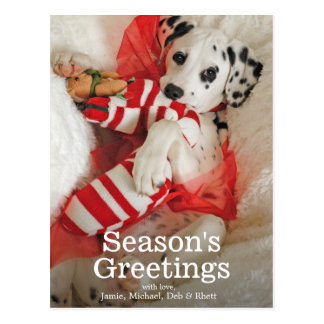 Dalmation puppy with Christmas stocking and holly Postcard