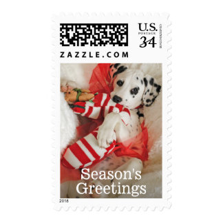 Dalmation puppy with Christmas stocking and holly Stamp