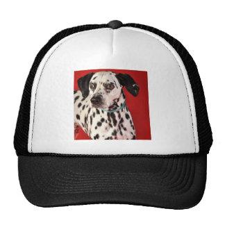 Dalmation Trucker Hats