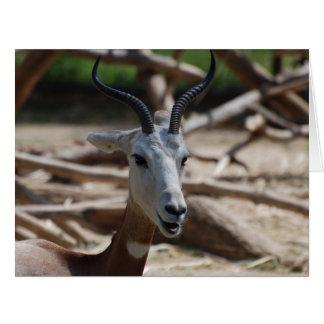 Dama Gazelle Cards
