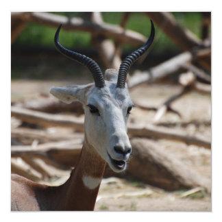 Dama Gazelle Invites