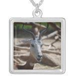 Dama Gazelle Jewelry