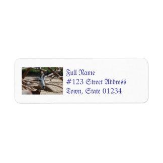 Dama Gazelle Return Address Labels