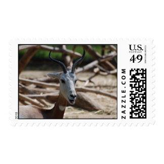 Dama Gazelle Stamps