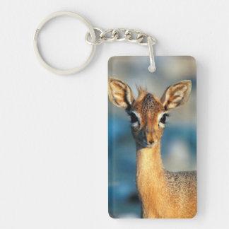 Damara Dik-Dik, Etosha National Park, Namibia Acrylic Keychains