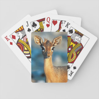 Damara Dik-Dik, Etosha National Park, Namibia Deck Of Cards