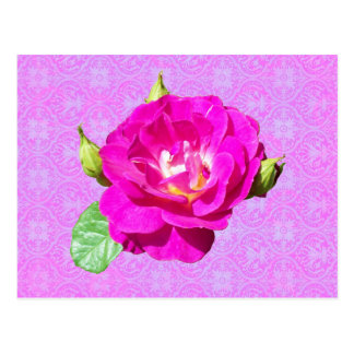 Damasco color de rosa violeta postal