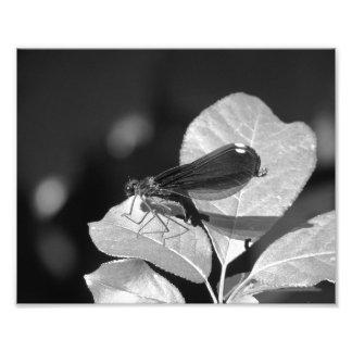 Damefly Photo Print