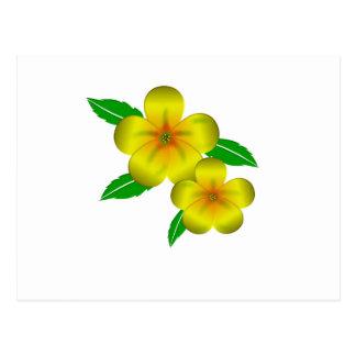 Damiana yellow flowers postcard
