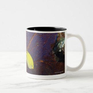 Damisela del limón taza de café