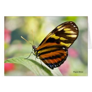 Damsel Butterfly Card
