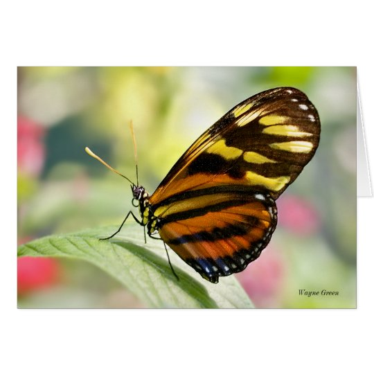 Damsel Butterfly Card