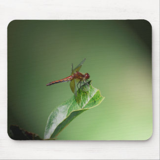 Damsel Fly Mouse Pad