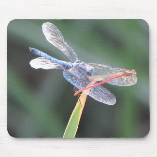 Damsel Fly Perched on Dragonfly Mouse Pad