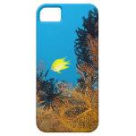 Damselfish de oro (Amblyglyphidodon aurífero), iPhone 5 Fundas